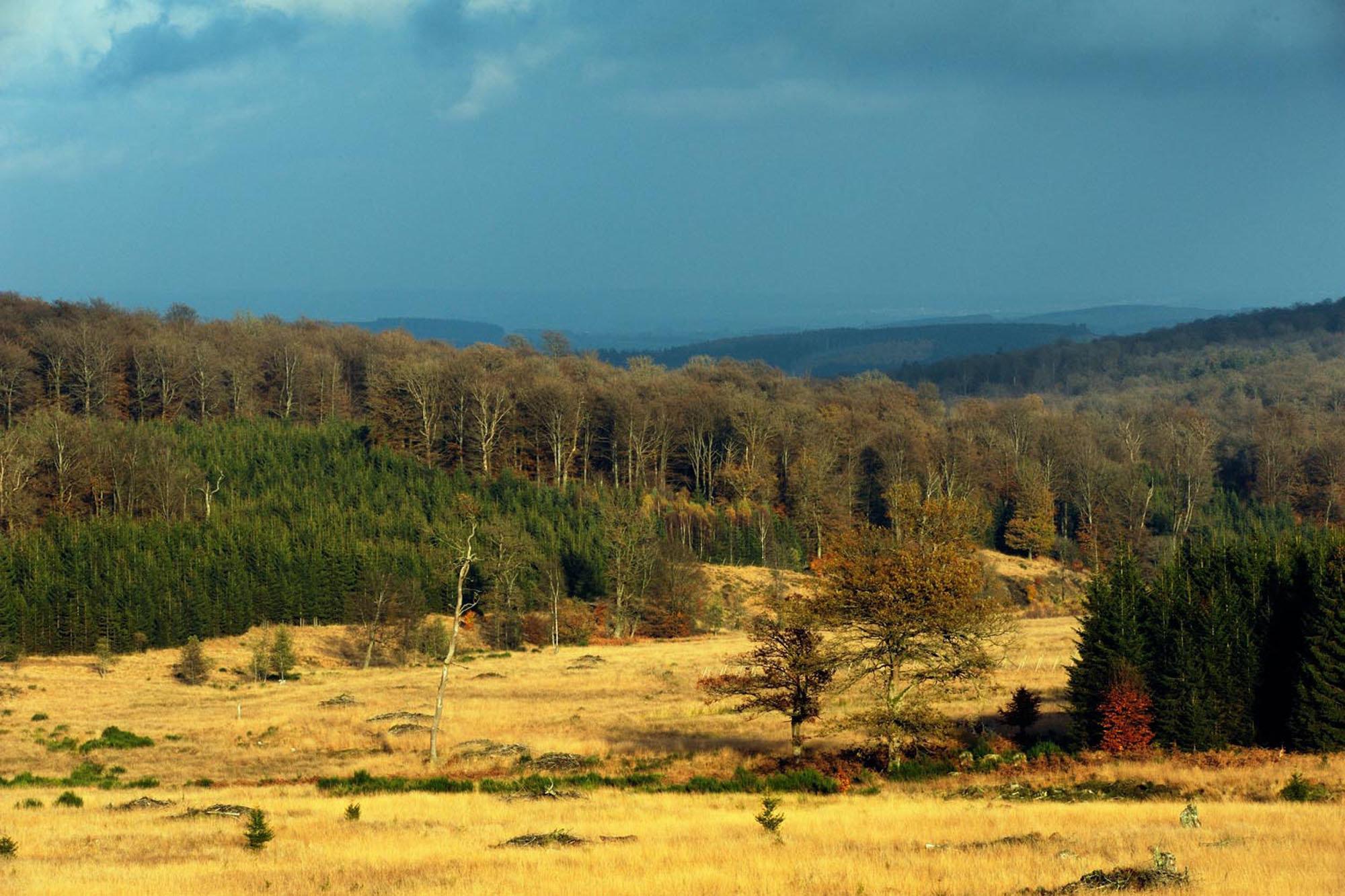 Forêt de Saint-Hubert, Ardennes Belges 2