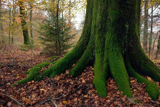 Ardennes 14