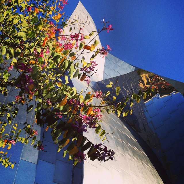 WALT DISNEY CONCERT HALL - ROSE 2