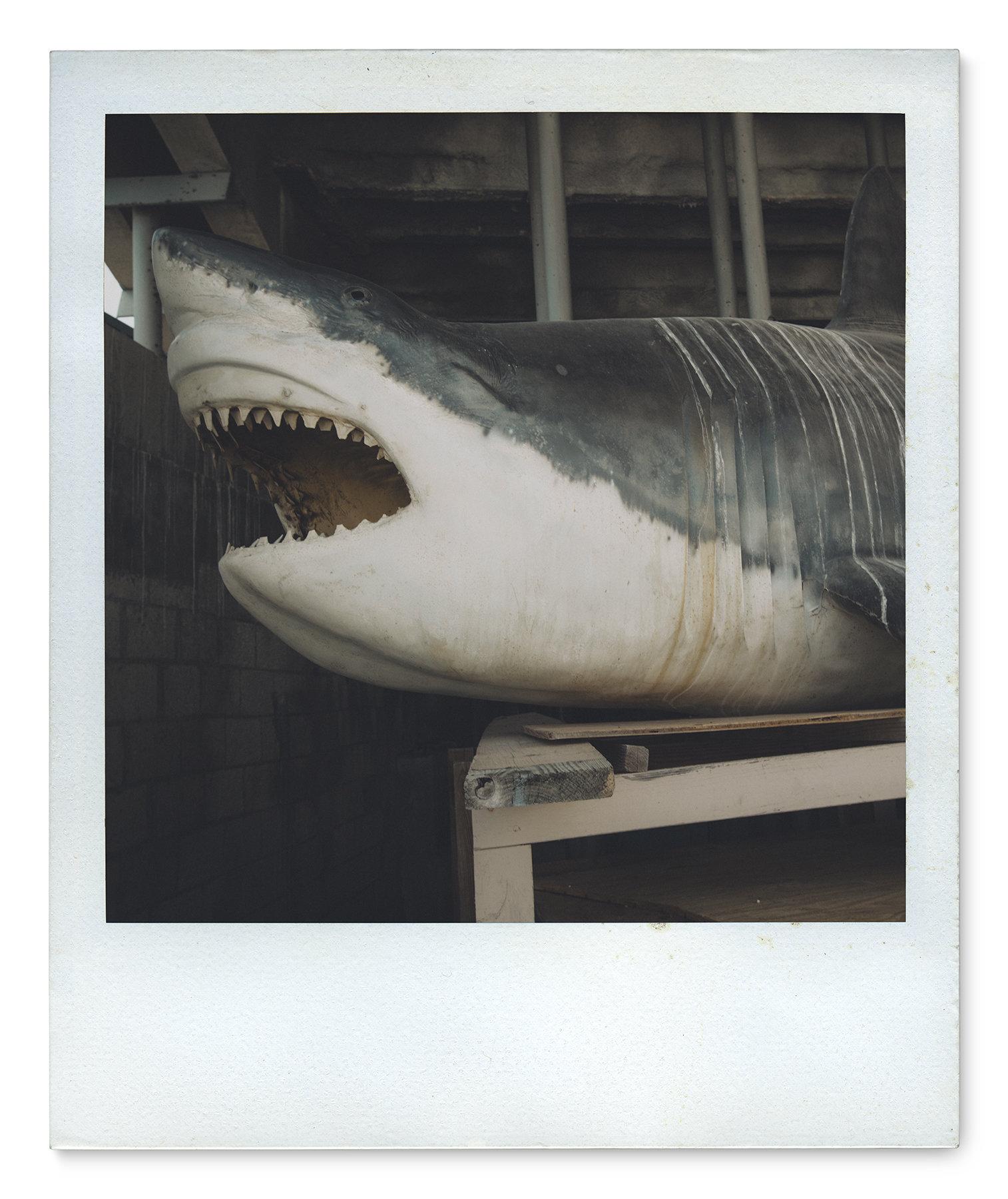 034_Polaroid SX70_MG_9761.jpg