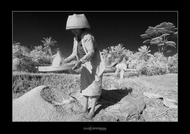 Bali riso.jpg