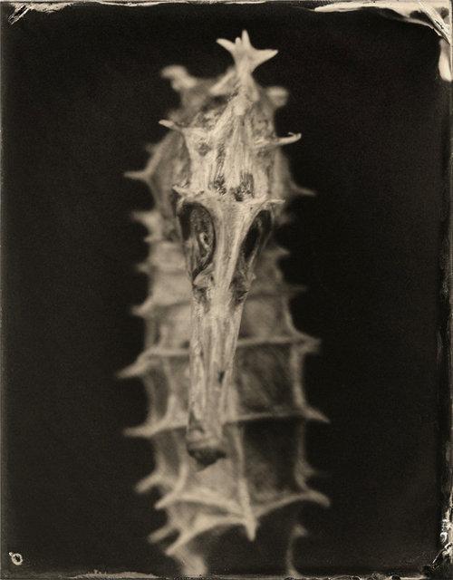 Hippocampus #3