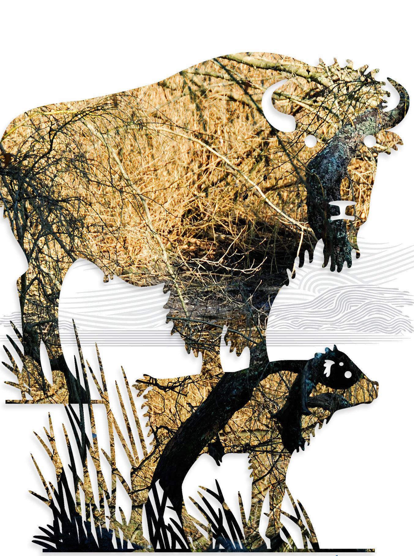 buffalo-01-(1).jpg