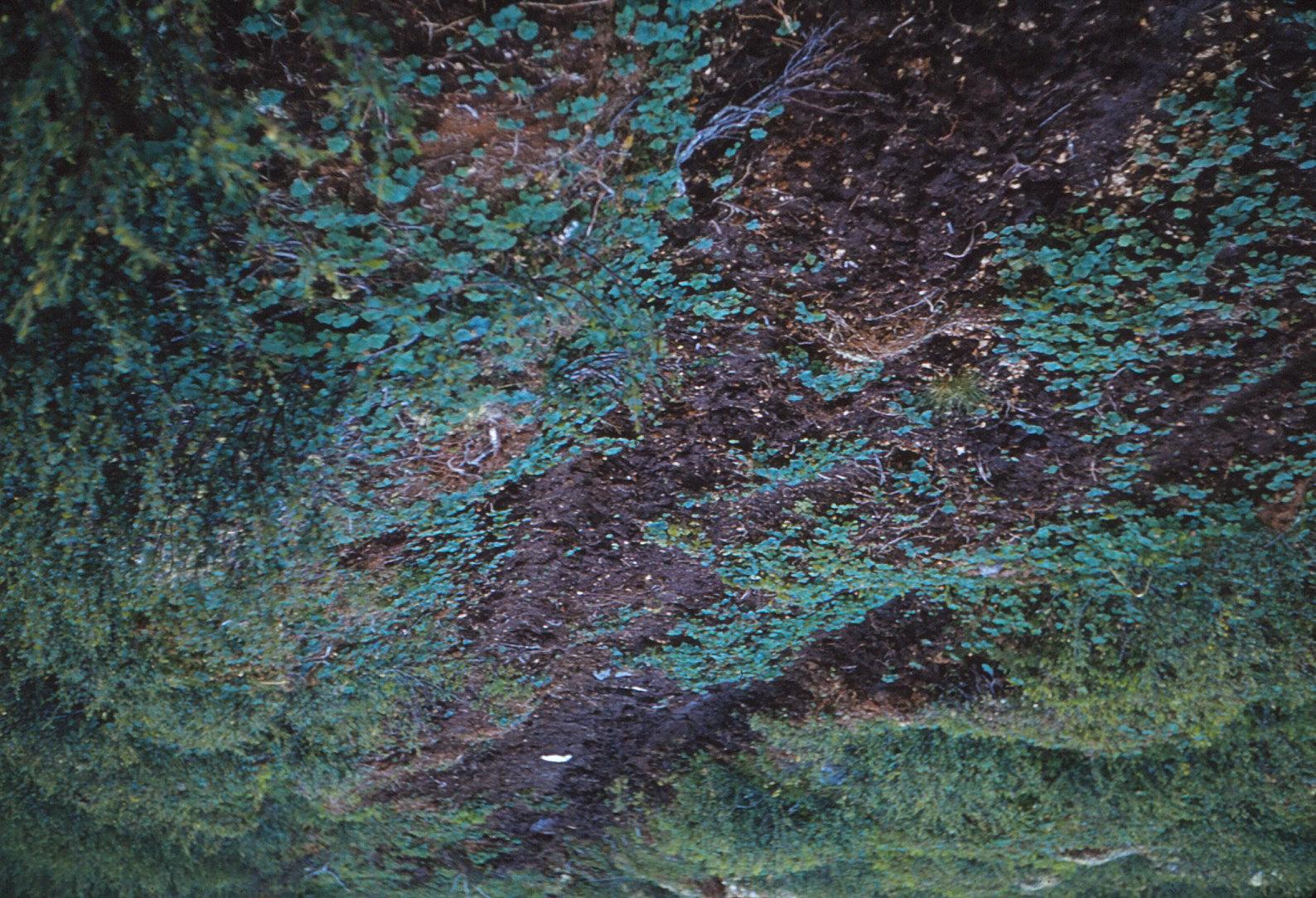 1007 (8) Veen bij tvillingsvann