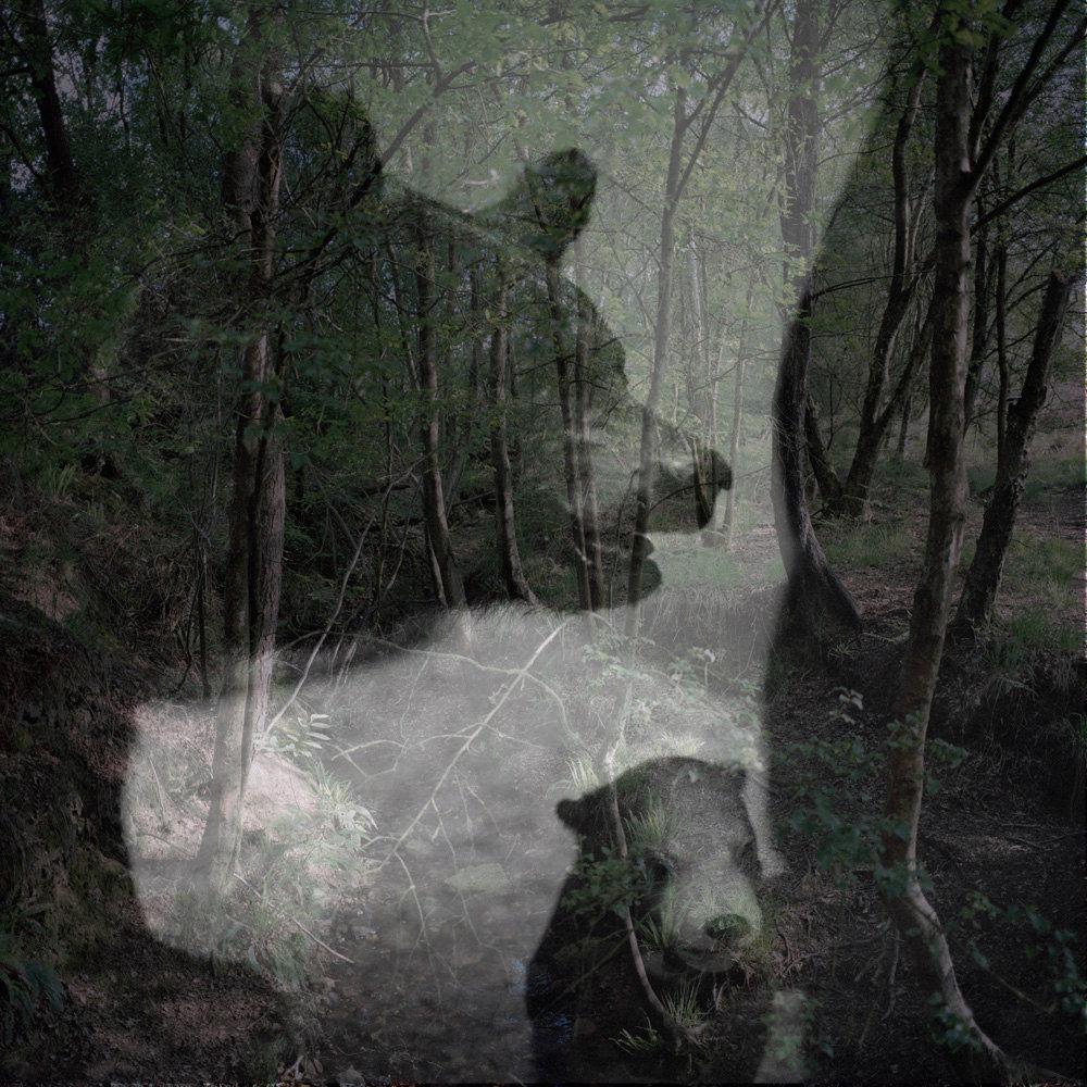 Rothschild_Bear_Ashdown.jpg