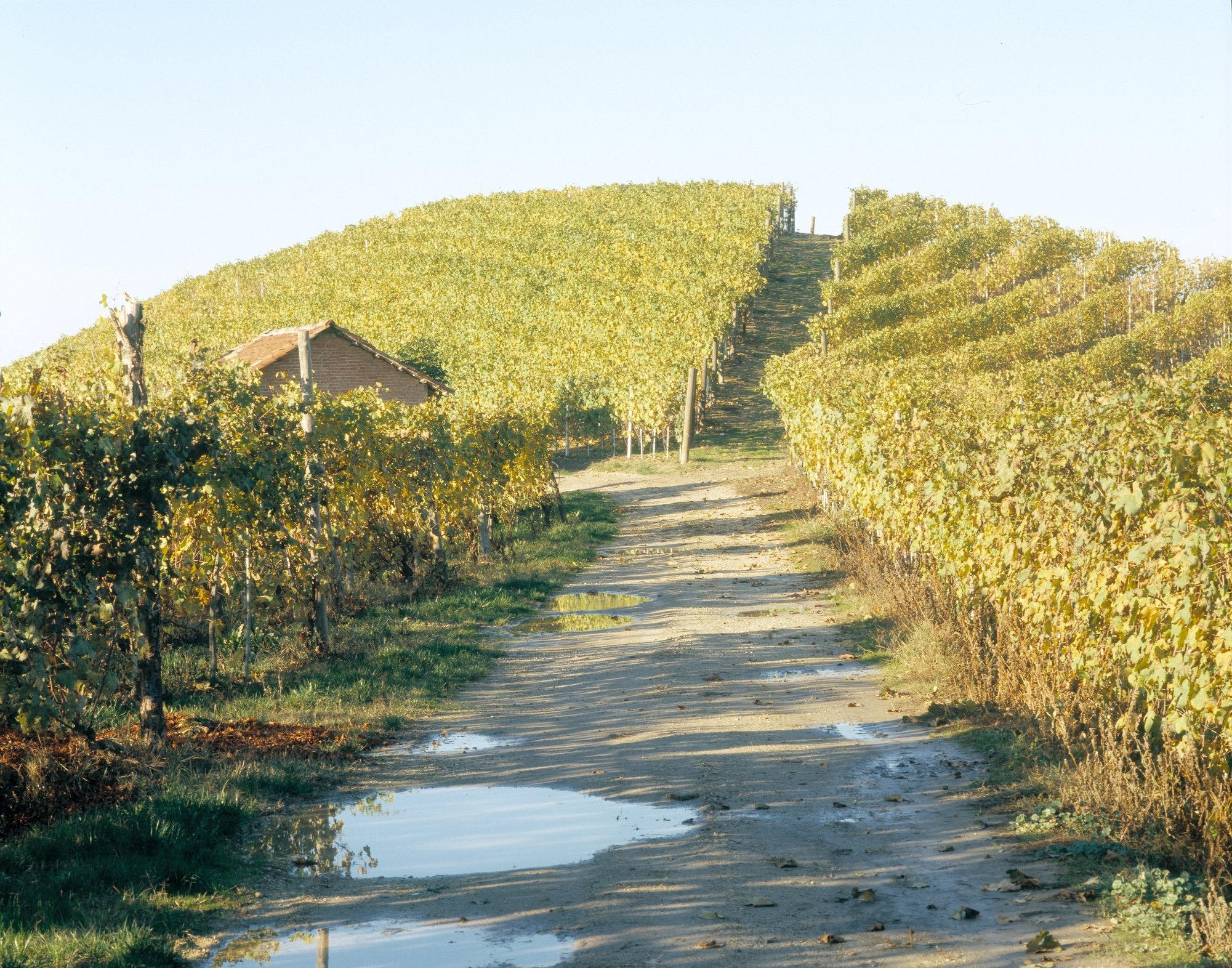 Italian Vendemia 73 fields#9