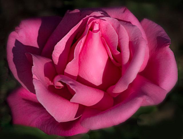 RosebudDay4_DSC8360-as-Smart-Object-1.jpg