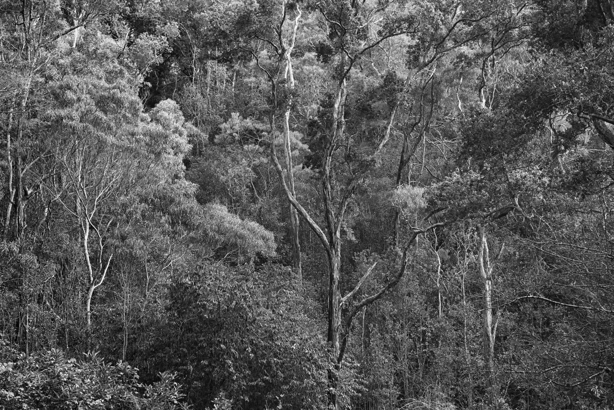 Waimea Canyon-03B&W.jpg