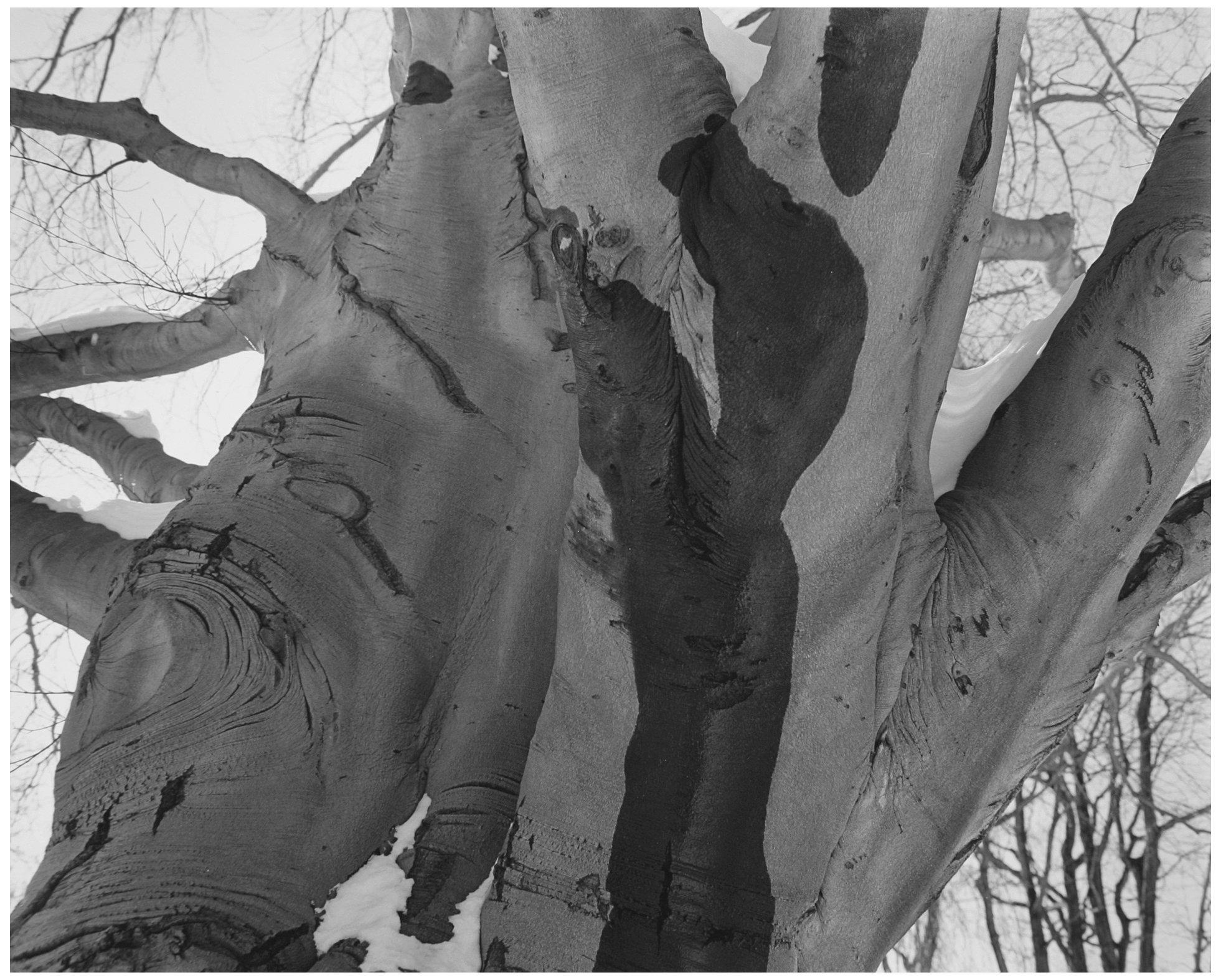 Trees  22.jpg