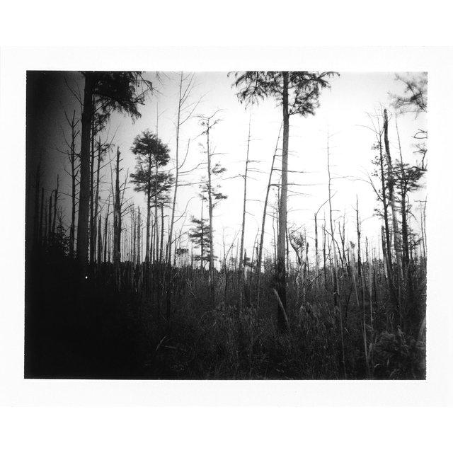 tallpines-burn-ervin2.jpg