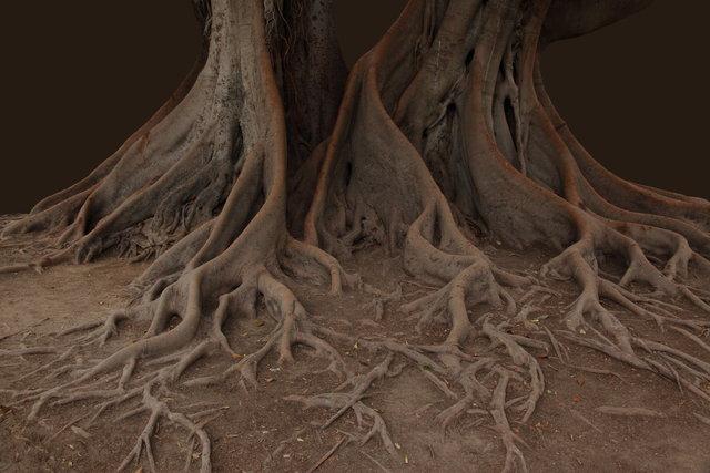 valencia tree 2