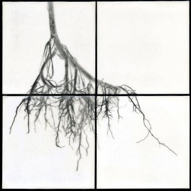 Root III