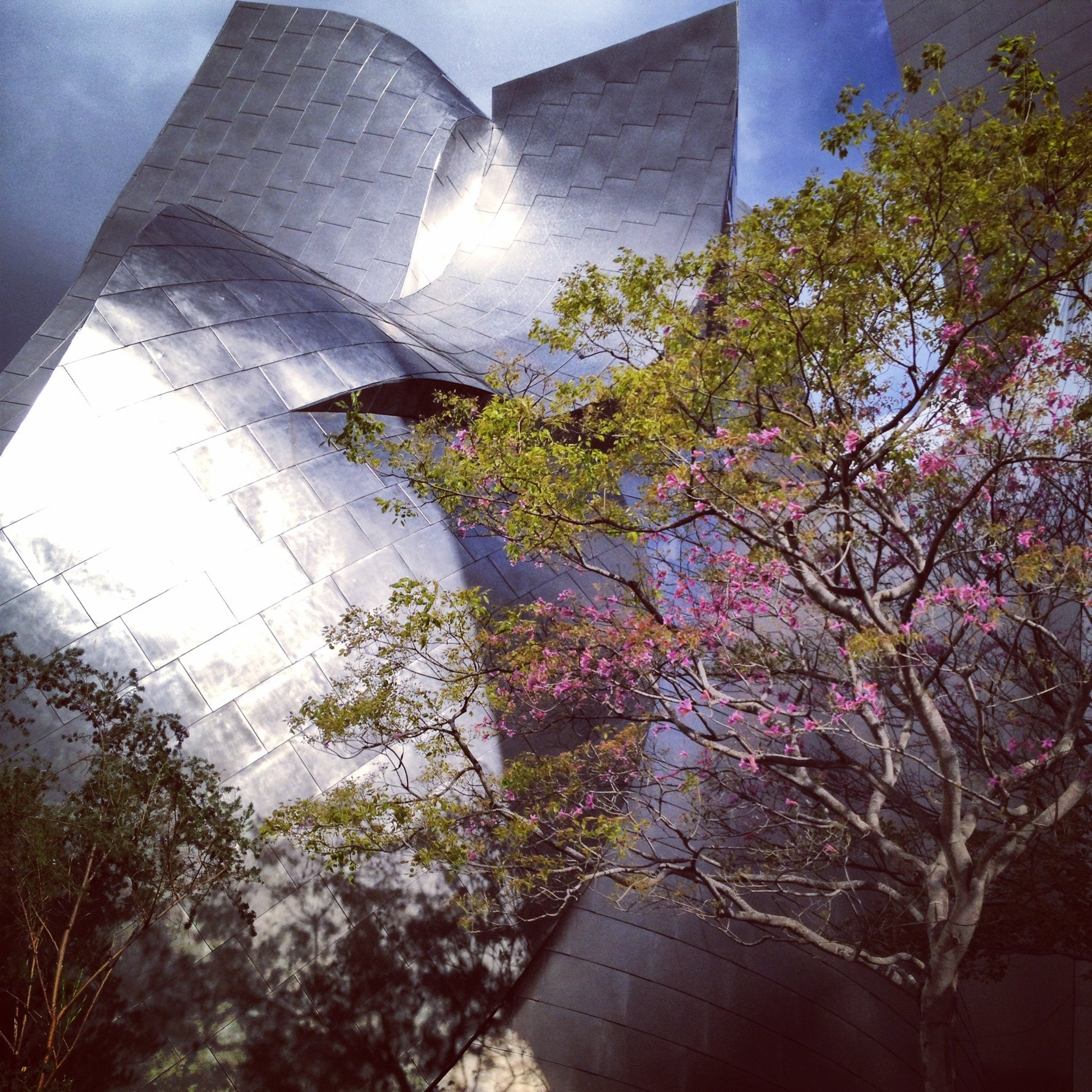 WALT DISNEY CONCERT HALL - ROSE 11