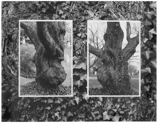 Trees  29.jpg