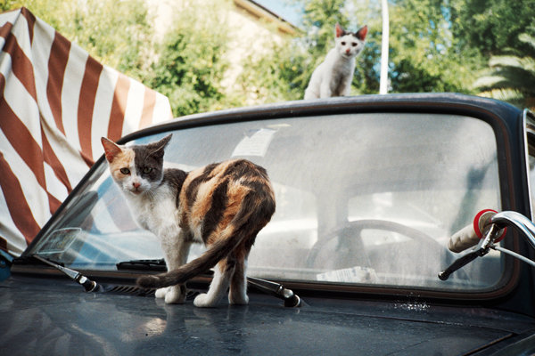 cats-ok!!!-wb.jpg