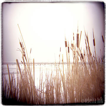 03-02-02-04 Cattails.jpg