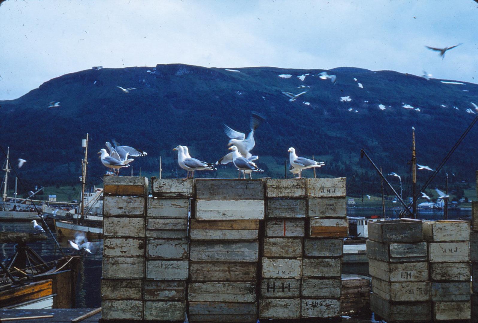 893 (4) Visvriezerij Tromsø