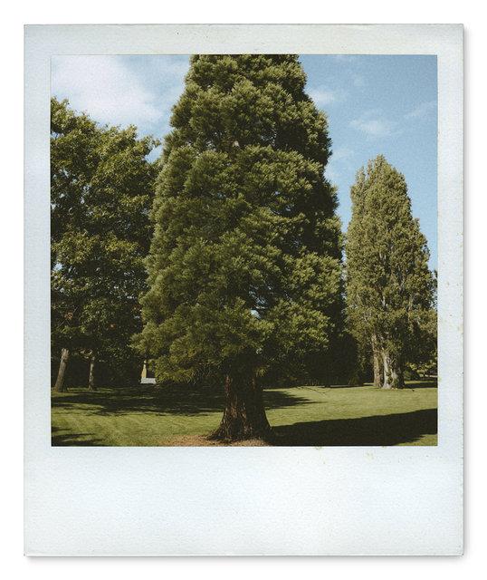 045_Polaroid SX70_DSC08412.jpg