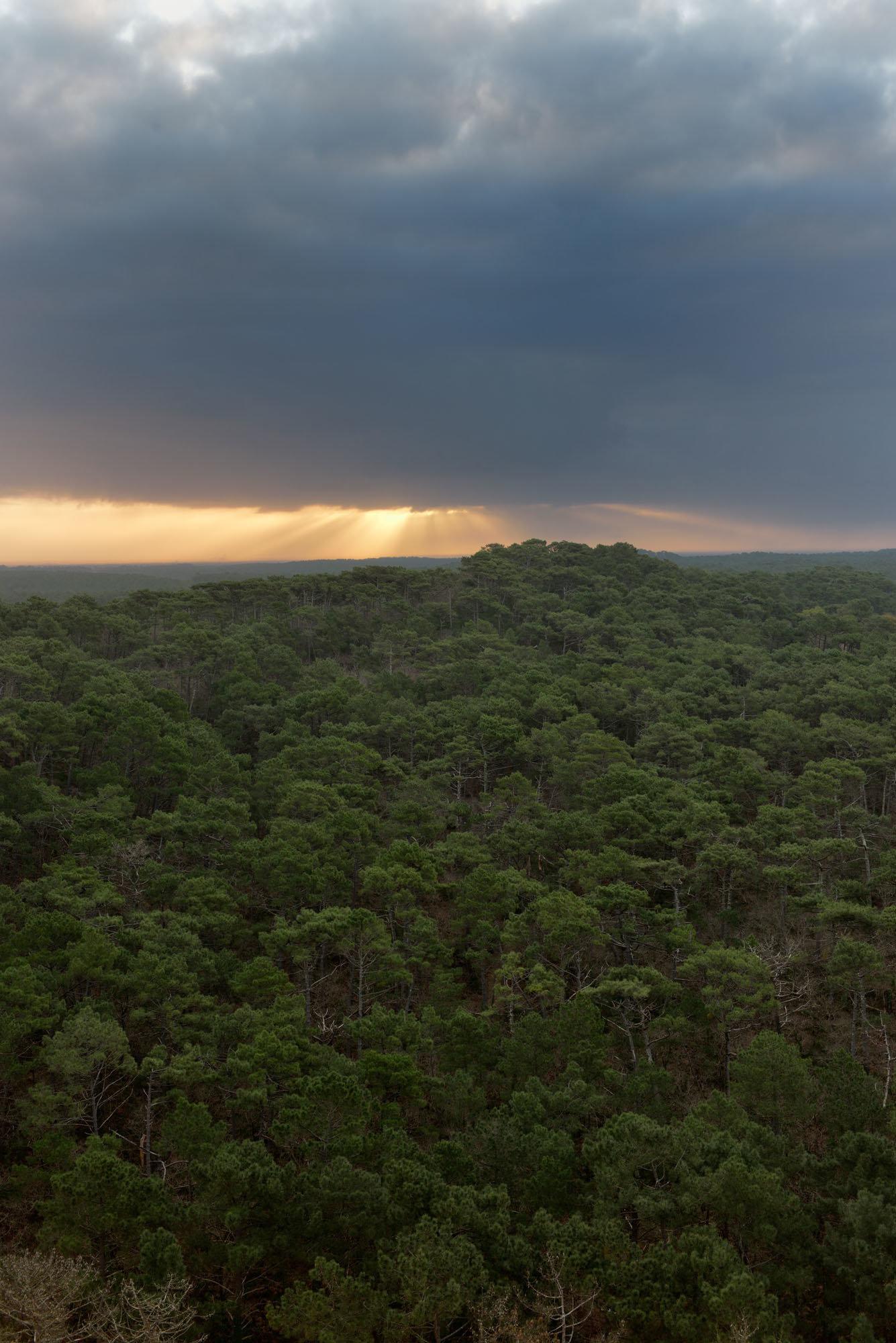 Forêt des Landes 2