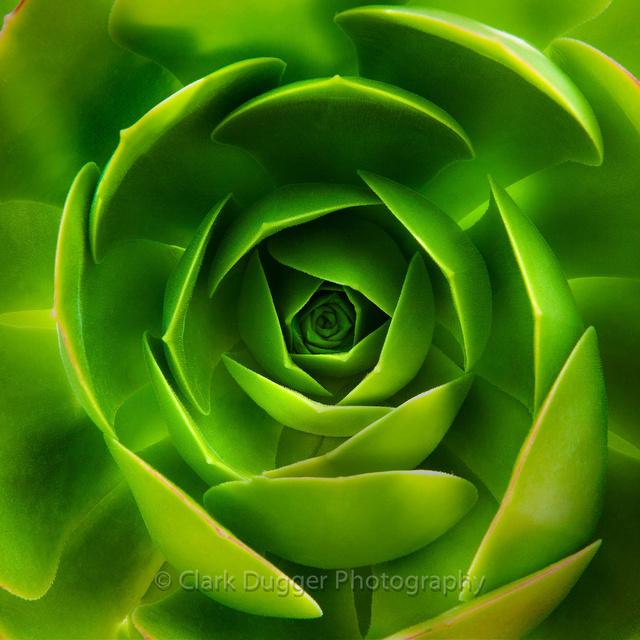 Succulent_1018_12x12-2.jpg