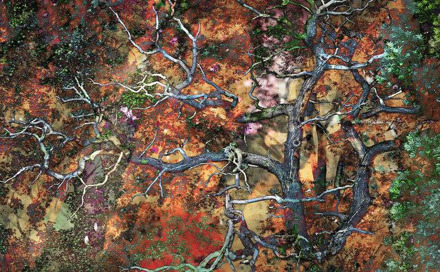 Drzewo wiadomości, vigrafia 082, 112x78