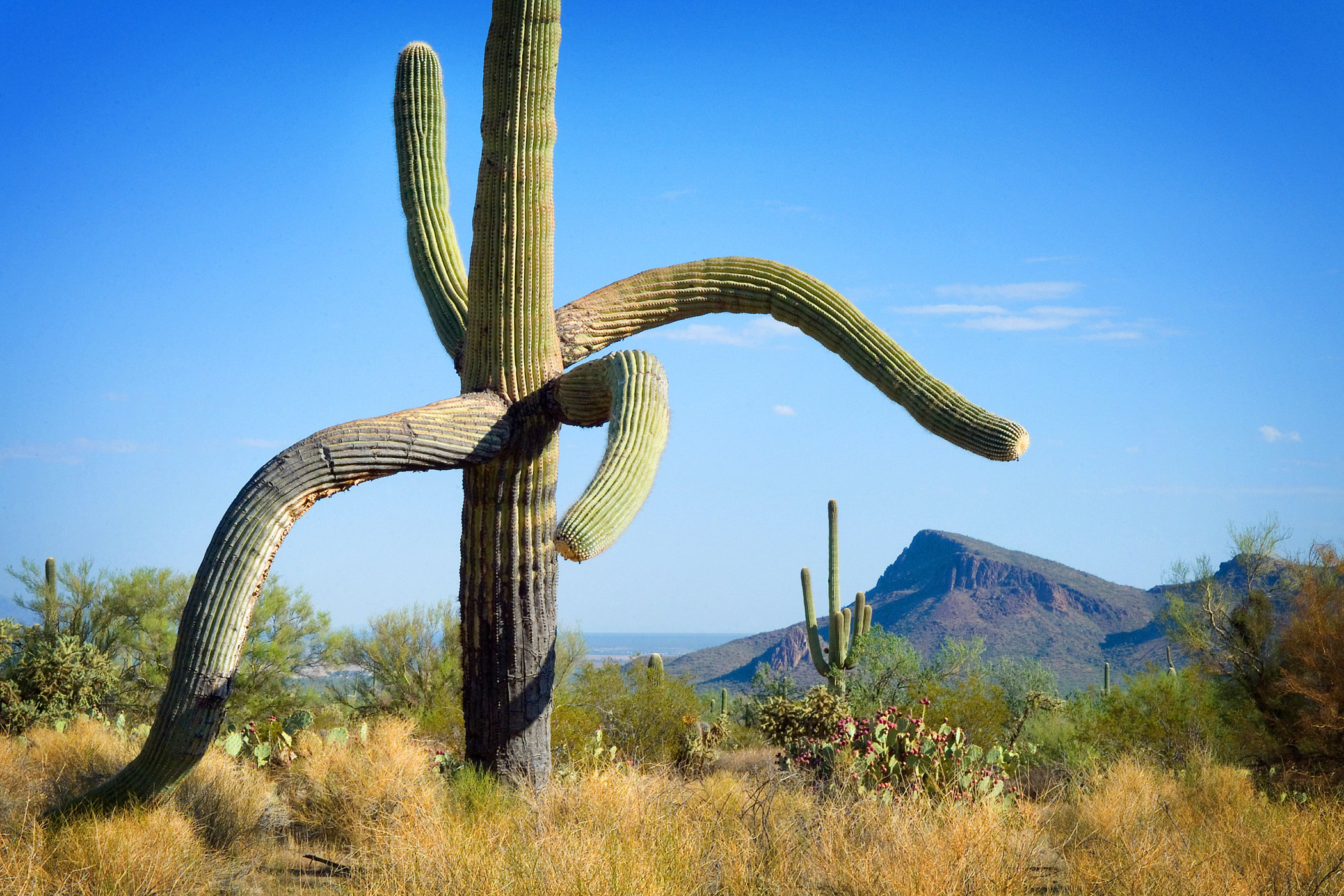 Saguaro West II