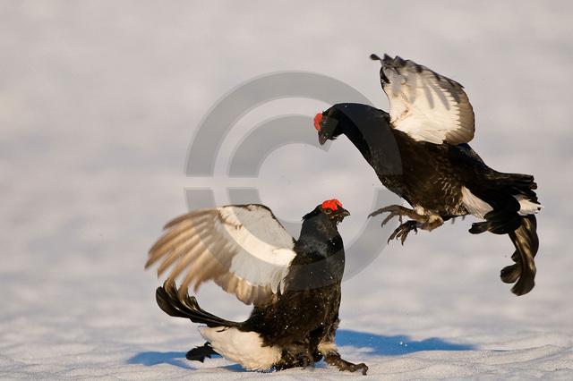 Tiere-Vögel-49.jpg