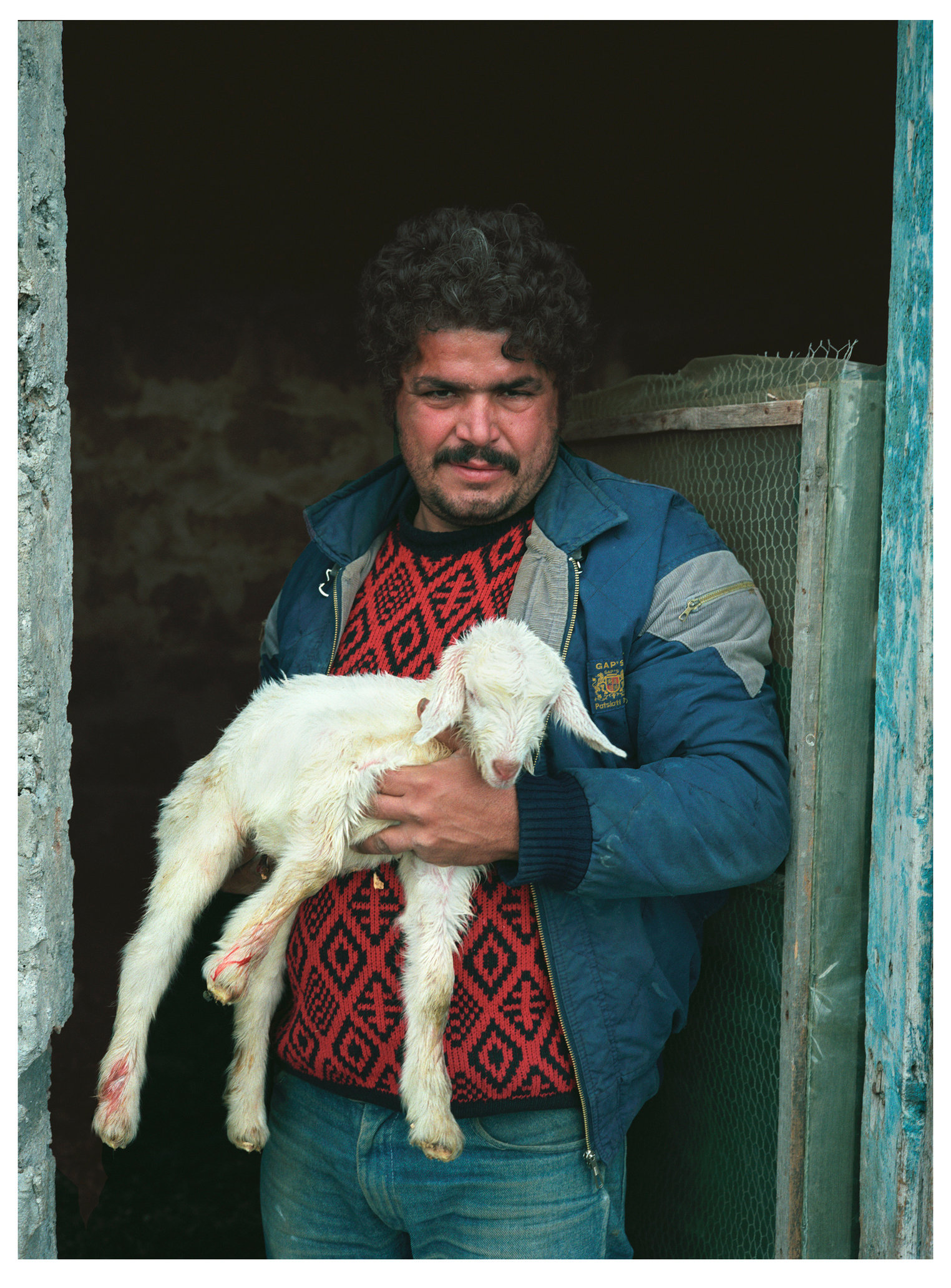 Animal Series New Born Lamb.jpg