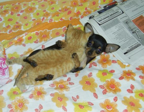cat_and_dog_hugging-303.jpg