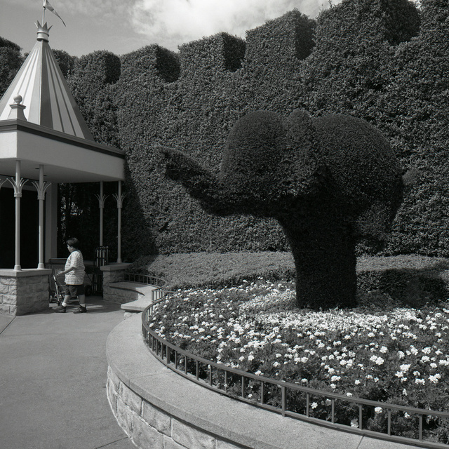 02_Elephant_Shrub V1_1.jpg
