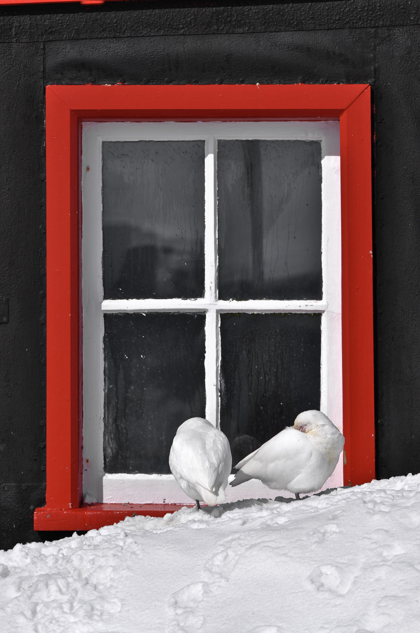 Window-Port Lockroy, Antarctica.jpg