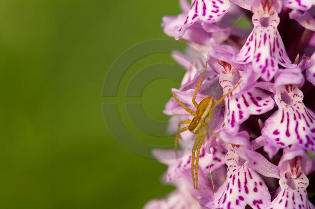 Pflanzen_Copyright_368.jpg