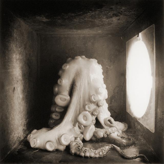 Octopus, c 2000