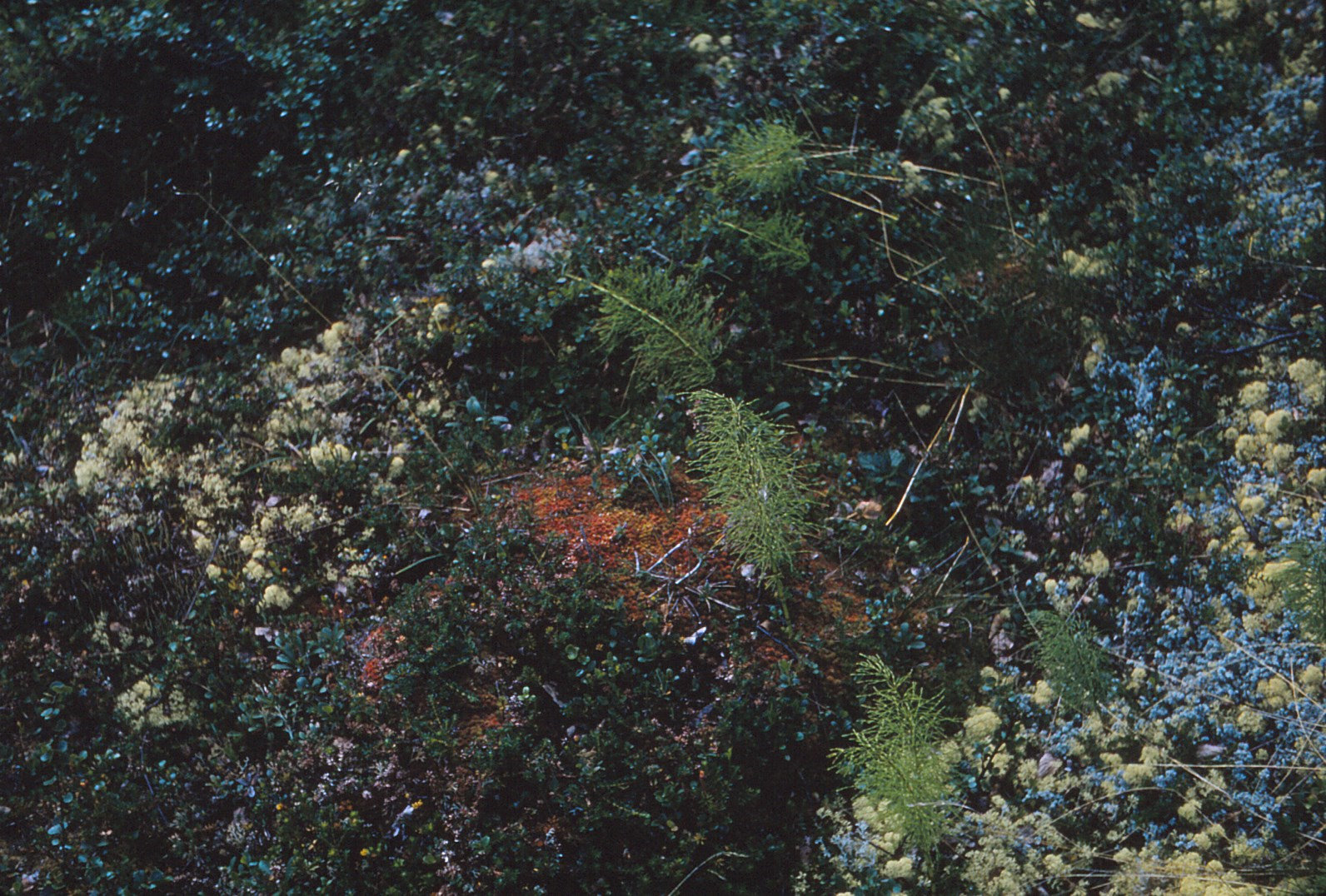 1081 (7) Vegetatie