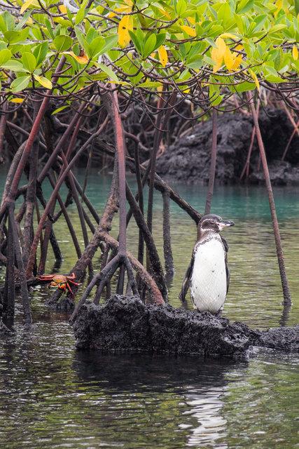 150422_Galapagos-1771.jpg