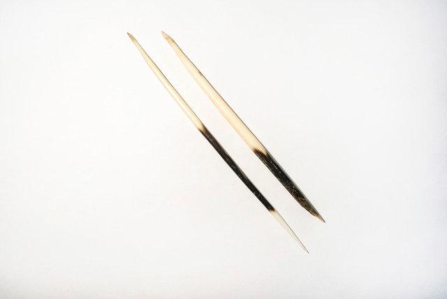 豪猪刺  (istrix quills)