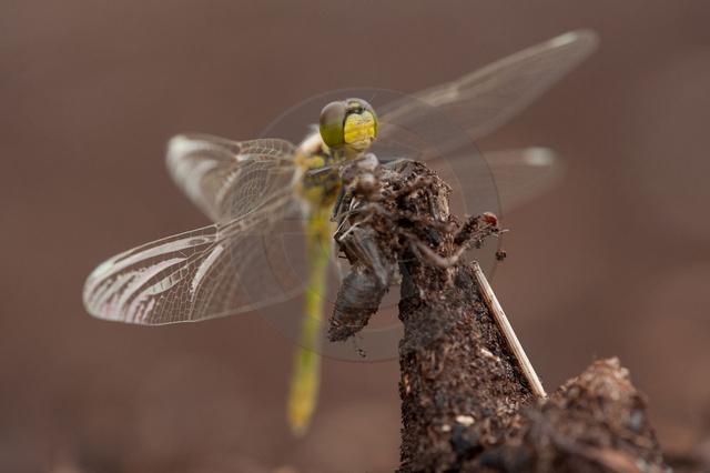 Insekten_Copyright_386.jpg
