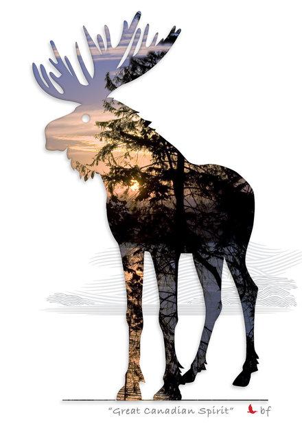 Moose-08.jpg