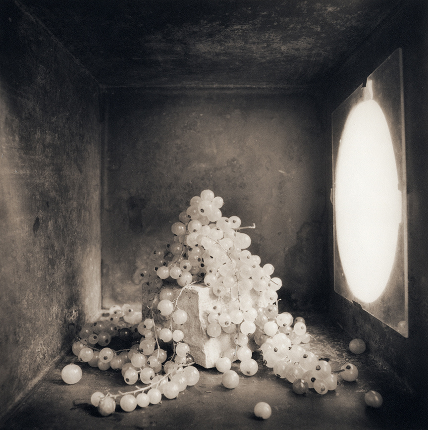 White Currants, c 2000
