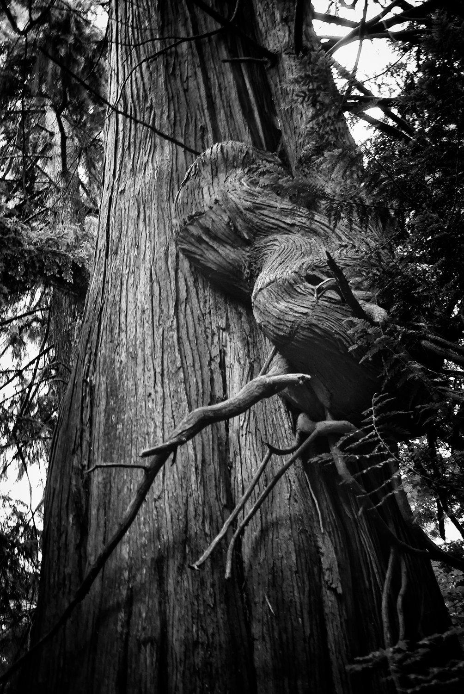 Tree-bw72.jpg