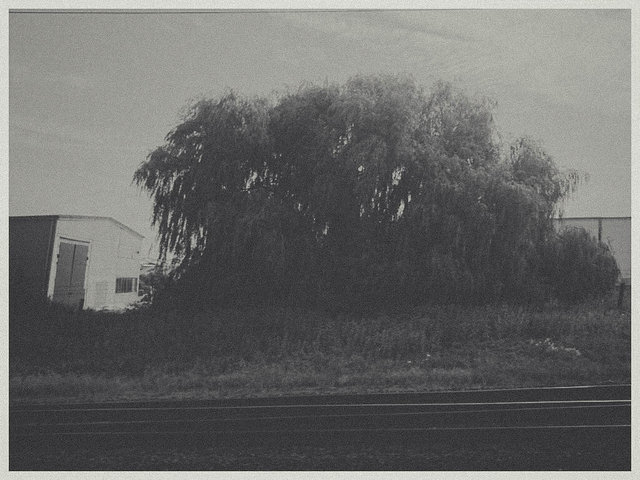 CameraZOOM-20140724085343067.jpg