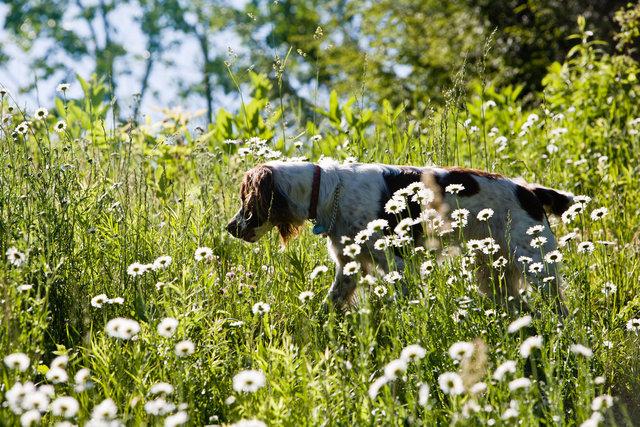 Zoe in the Field