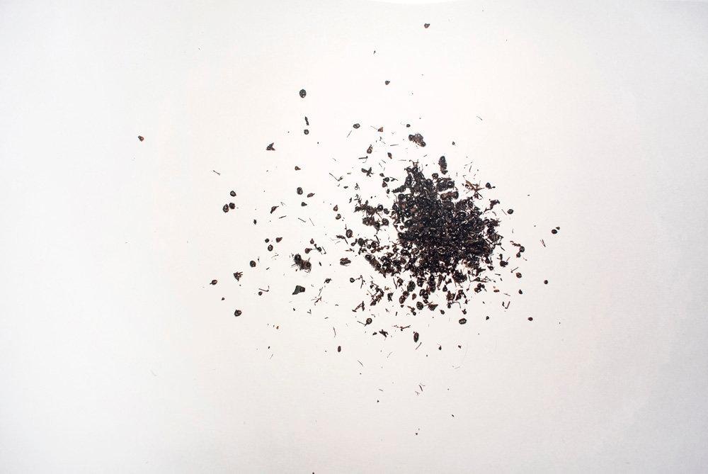 黑蚂蚁  (Hei Mayi)