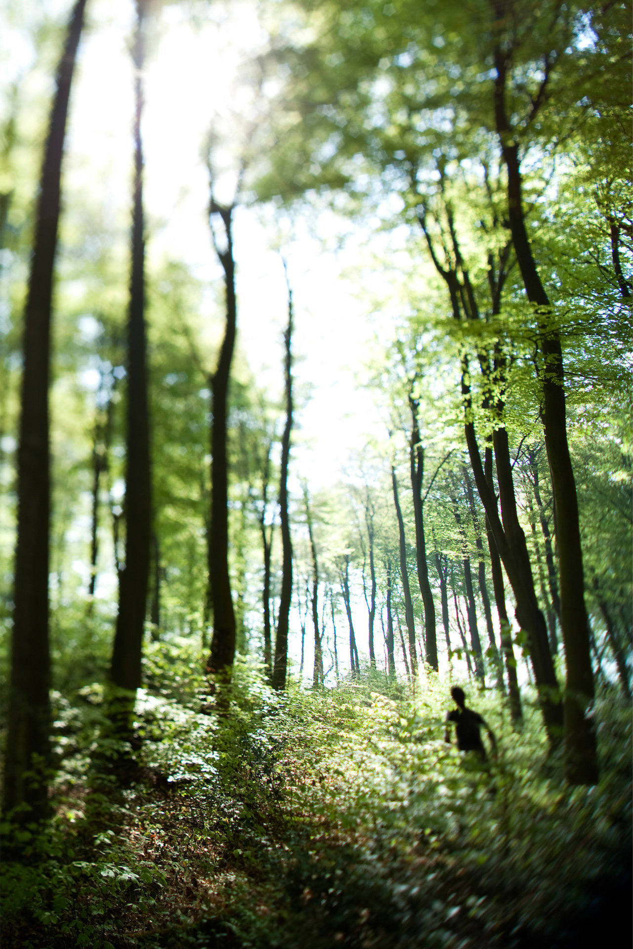 Forêt de Brotonne, Haute-Normandie, 2011