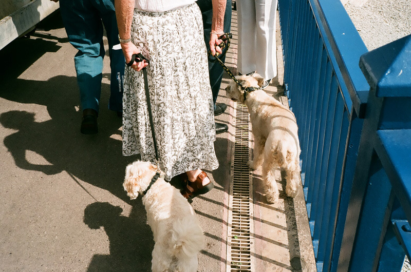 vieux bras et jeunes chiens.jpg