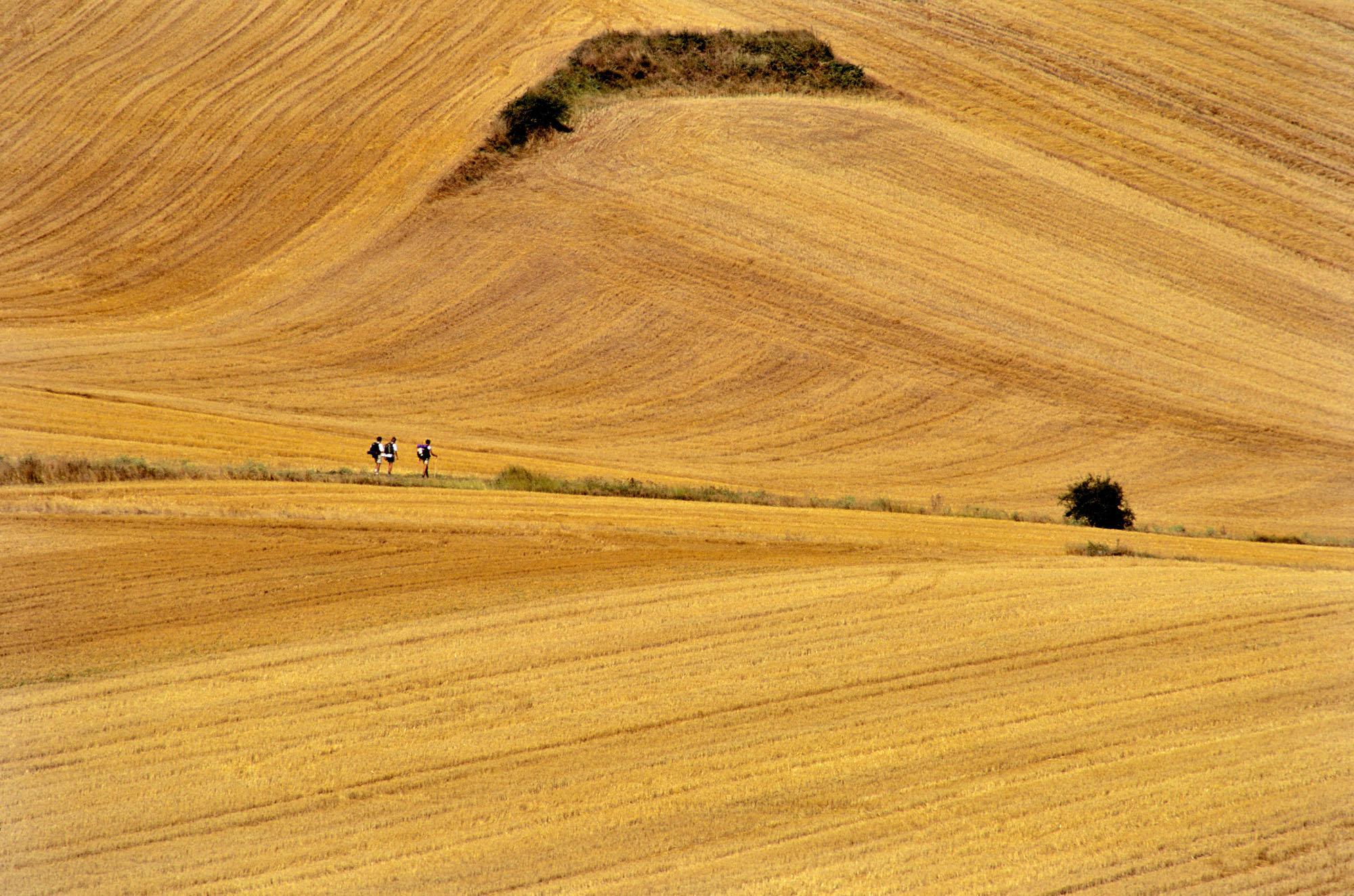 Le chemin dans la Rioja