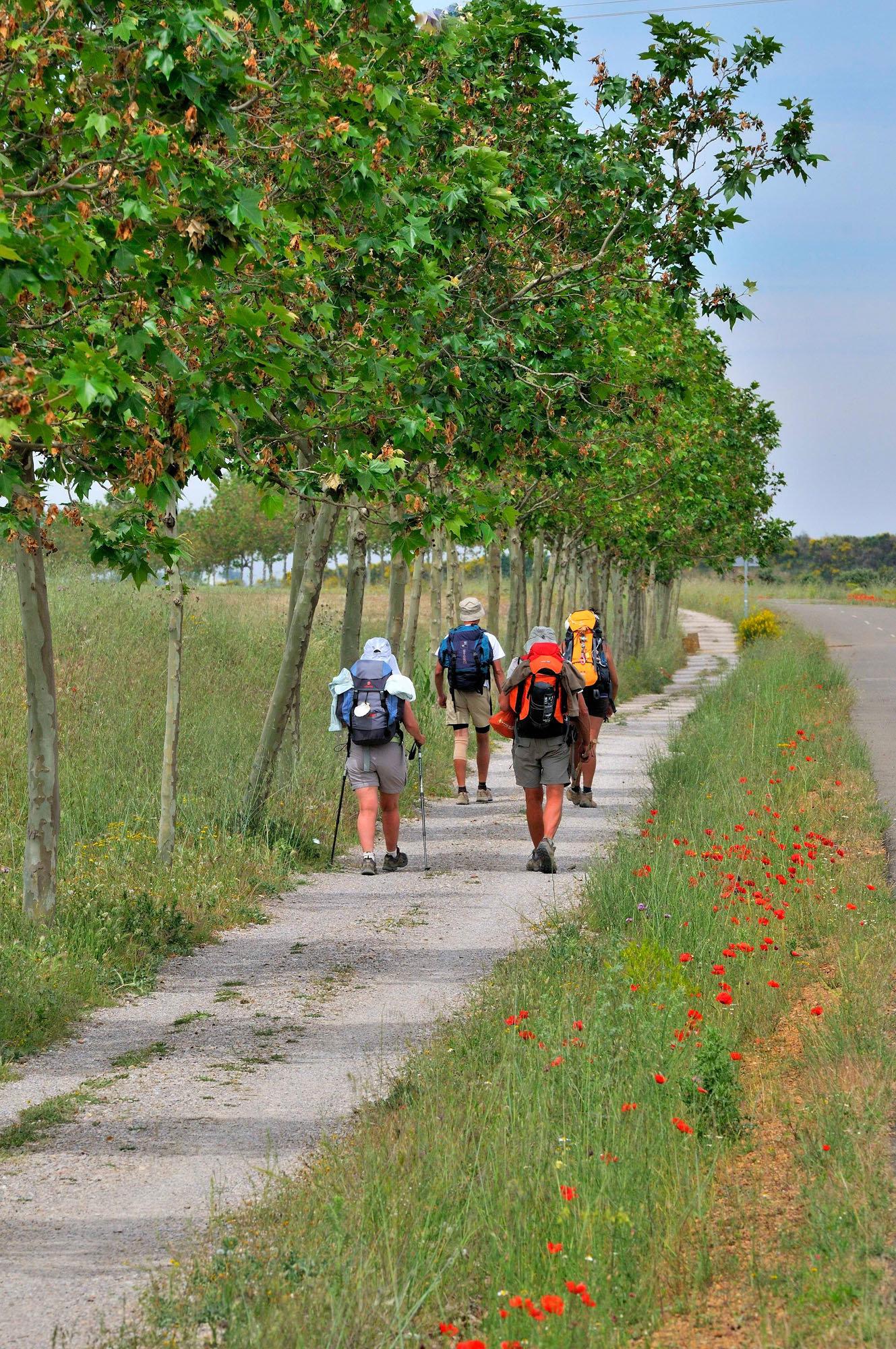 Le chemin près de Sahagun, Castille