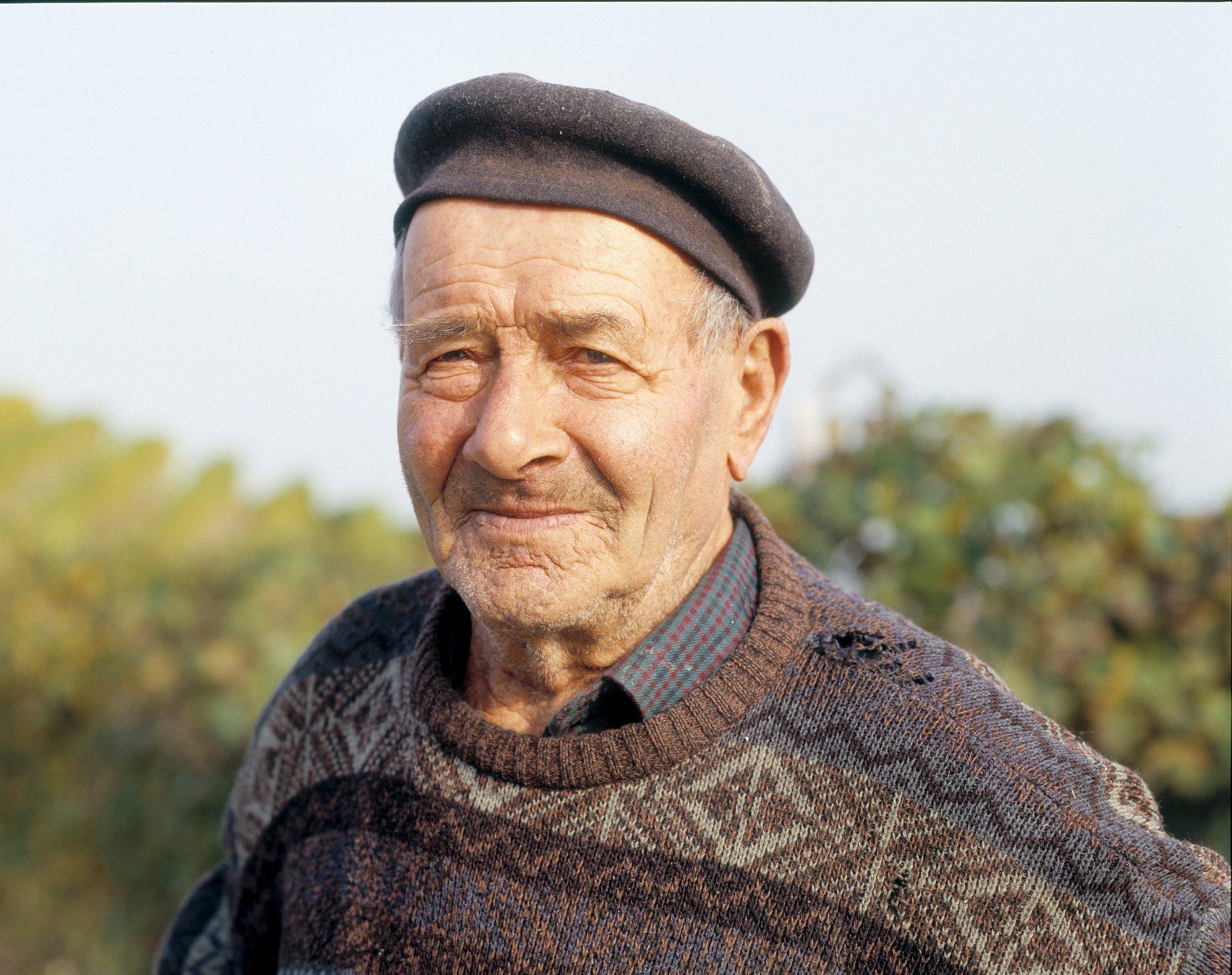 Italian Vendemia 40 oldman in vineyard#3
