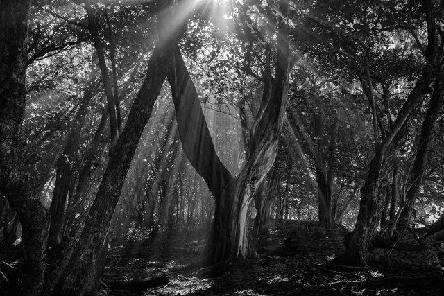 Ke'e Tree02.jpg