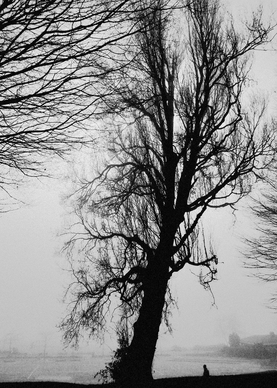 Tree-bw48.jpg